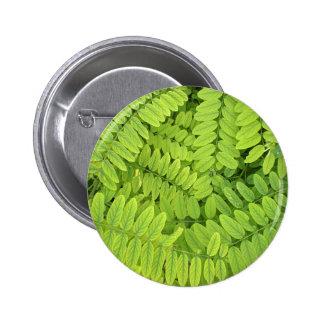 Hojas verdes claras y pequeño acacia con descenso pin redondo de 2 pulgadas
