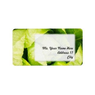 Hojas verdes de la lechuga con las gotas de agua etiquetas de dirección
