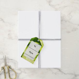 Hojas verdes de la lechuga con las gotas de agua etiquetas para regalos