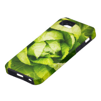 Hojas verdes de la lechuga con las gotas de agua funda para iPhone SE/5/5s