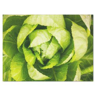 Hojas verdes de la lechuga con las gotas de agua papel de seda