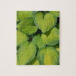 Hojas verdes de la planta del hosta de la primaver