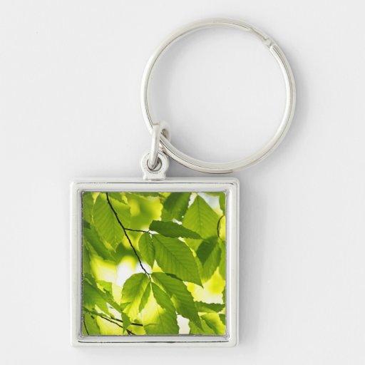 Hojas verdes de la primavera llaveros personalizados