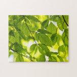 Hojas verdes de la primavera rompecabezas con fotos
