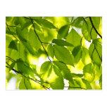 Hojas verdes de la primavera tarjeta postal