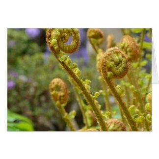 Hojas verdes del helecho de fiddlehead tarjeta de felicitación
