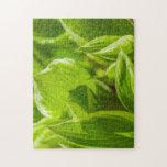Hojas verdes del Hosta Puzzles