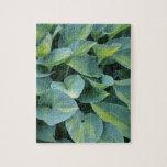 Hojas verdes enormes de la planta del hosta