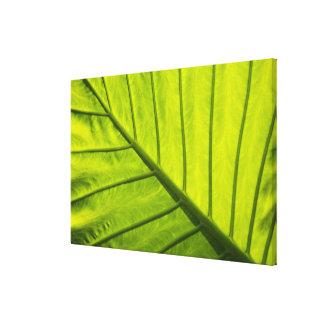 Hojas veteadas verde del follaje tropical adentro lona envuelta para galerias