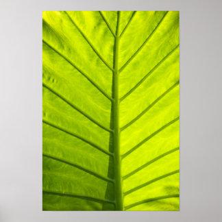 Hojas veteadas verde del follaje tropical adentro posters
