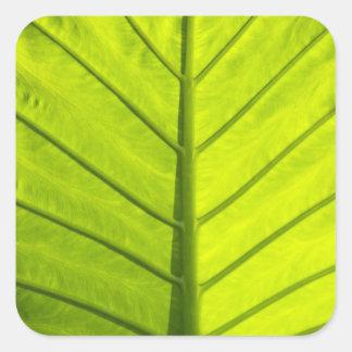 Hojas veteadas verde del follaje tropical adentro pegatina cuadrada