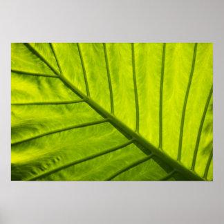 Hojas veteadas verde del follaje tropical adentro póster
