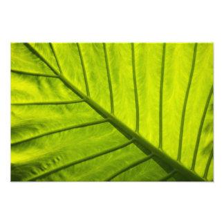 Hojas veteadas verde del follaje tropical en 2 cojinete