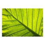Hojas veteadas verde del follaje tropical en 2 fotografia