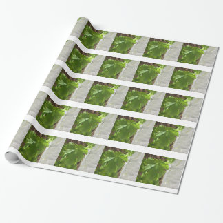 Hojas Wrapping Paper
