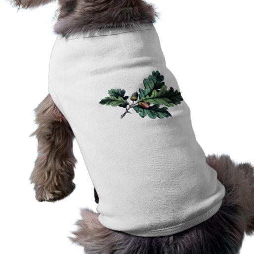 Hojas y bellotas botánicas antiguas del roble de l prenda mascota