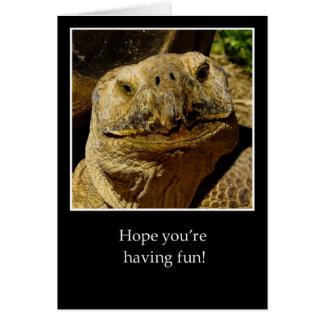 Hola a la tortuga sonriente del campista tarjeta de felicitación