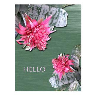 Hola Bromeliad florecido rosado Tarjeta Postal