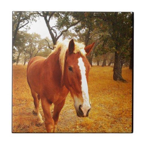 Hola caballo azulejo cuadrado pequeño