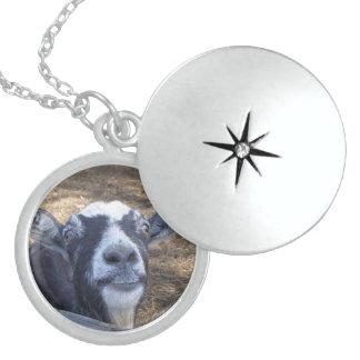 Hola cabra amistosa pendientes