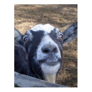 Hola cabra amistosa tarjetas postales