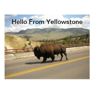 Hola de la postal de Yellowstone