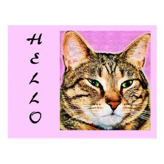 Hola gato de Tabby Postal
