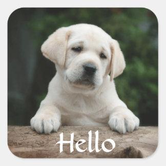 Hola/hola pegatinas del perro de perrito del pegatina cuadrada
