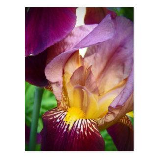 Hola iris tarjetas postales