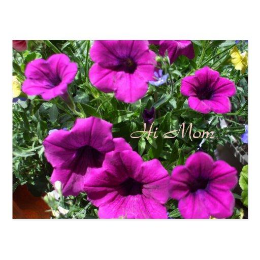 Hola Mamá-Petunias para el día especial de la mamá Tarjetas Postales