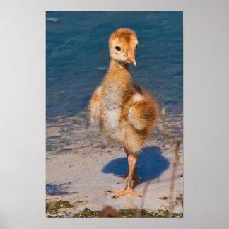 Hola mundo con el polluelo de la grúa de Sandhill Impresiones