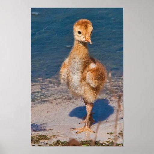 Hola mundo con el polluelo de la grúa de Sandhill Póster