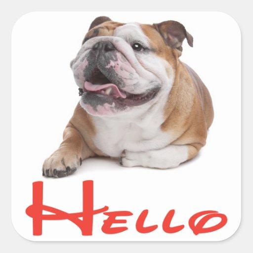 Hola pegatina/etiqueta ingleses del perro de pegatina cuadrada