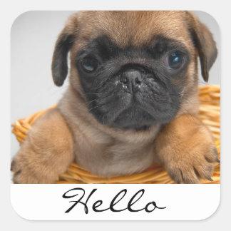 Hola pegatinas del perro de perrito del barro pegatina cuadrada