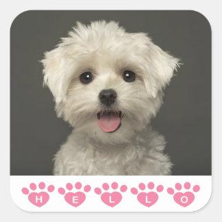 Hola pegatinas/sellos malteses del perro de pegatina cuadrada