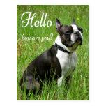 Hola perro de perrito de Boston Terrier que piensa Postal