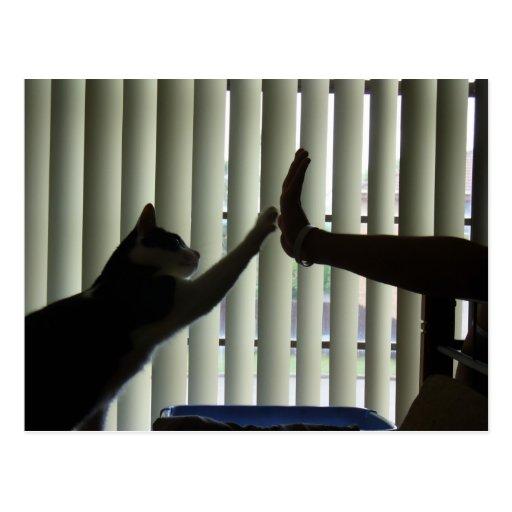 Hola postal de 5 gatos