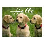 Hola postal del perro de perrito del golden retrie
