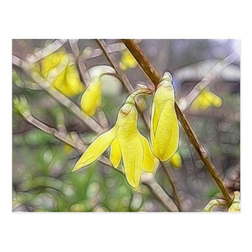 ¡Hola primavera!  Forsythia en la floración Postales