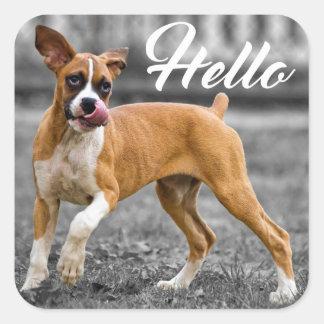 Hola saludo del perro de perrito del boxeador pegatina cuadrada