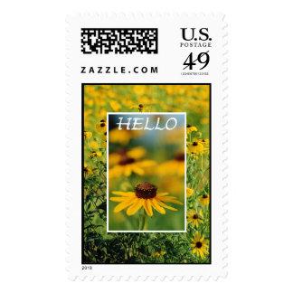 Hola - sello Negro-Observado de Susans