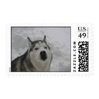 Hola sellos del perro esquimal