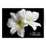 Hola tarjeta de felicitación de la flor del lirio