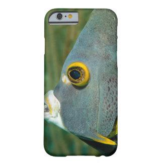 Holandés Antillas, Bonaire, primer subacuático Funda De iPhone 6 Barely There