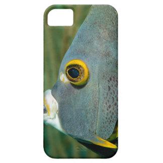 Holandés Antillas, Bonaire, primer subacuático Funda Para iPhone 5 Barely There