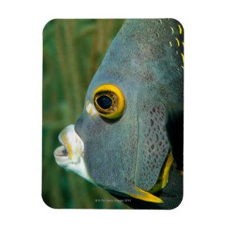 Holandés Antillas, Bonaire, primer subacuático Iman