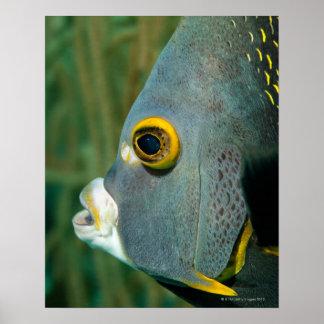 Holandés Antillas, Bonaire, primer subacuático Póster