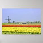 Holandés típico: Molino de viento y tulipfields Posters