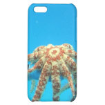 Holding a Starfish iPhone 5C Covers