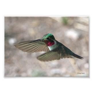 Holding Flight Photo Print